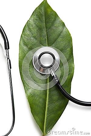 Stethoscope on a leaf