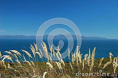 Stewart Island, NZ