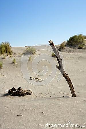Stick in sand