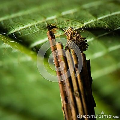 Stick Worm