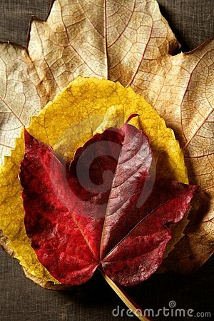 Still of autumn leaves, dark wood background, fall