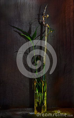 Still-life with bamboo