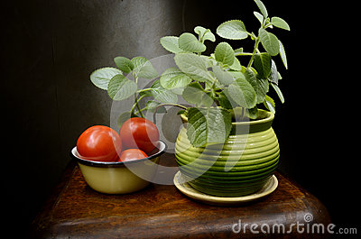 Still Life with basil and tomatoes