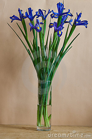 Still-life with blue irises