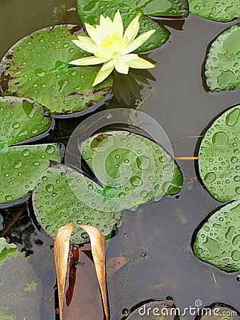 Free Still Life - Botanical Gardens - São Paulo - Brasil Stock Photo - 258170