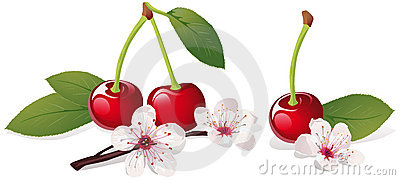Still life with cherry
