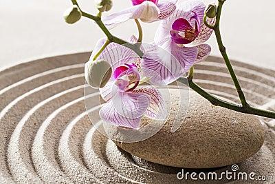Still-life for natural femininity and softness