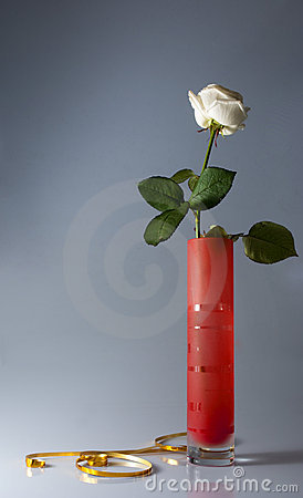 Still life with one white rose