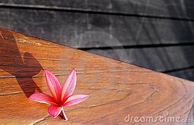 Still life of pink flower on wood patio table