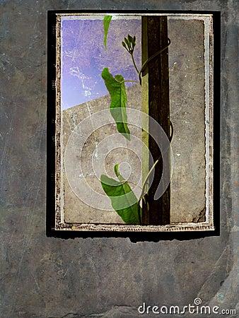 Still life Postcard - grunge frame