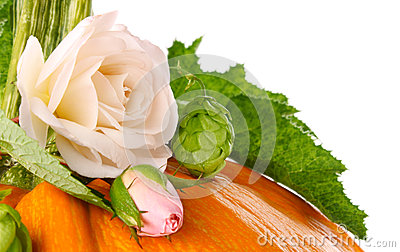 Still life of pumpkin flower and leaf
