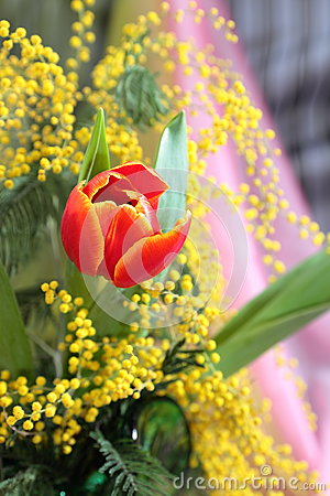 Still-life with red tulips yellow mimosa