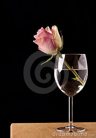 Still Life With The Rose Royalty Free Stock Images - Image: 17518309