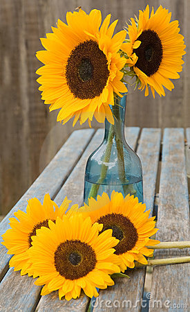 Still life with sunflowers in blue glass decanter,