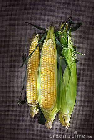 Still life with three indian corn ears