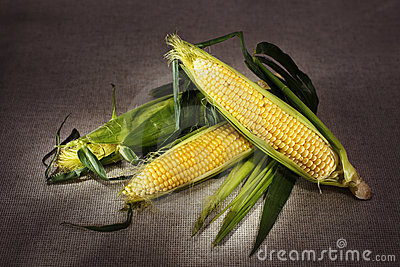 Still life with three indian corn on gray linen