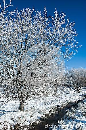 Still life - winter