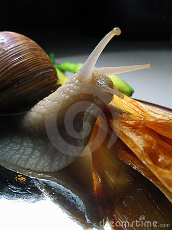 Free Still-life With A Snail Royalty Free Stock Photos - 158098