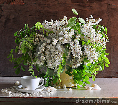 Free Still Life With A White Acacia Stock Photos - 15421723