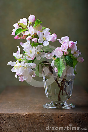 Free Still Life With Blossoming Apple Tree Stock Photos - 40709733
