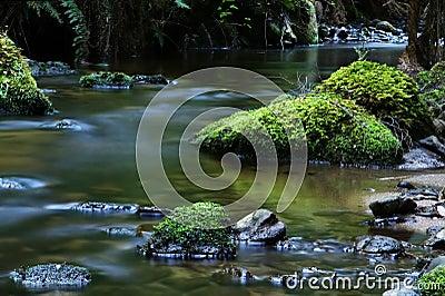 Stillsam flod