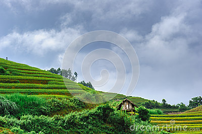 Stilt house on the rice terraced field with the sky and clouds a
