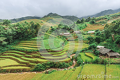 Stilt houses on the hills of rice terraced fields