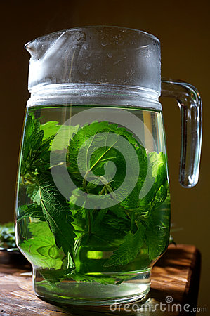 Free Stinging Nettle Urtica Dioica Poured In Hot Water As Herbal Tea Stock Photo - 32160600