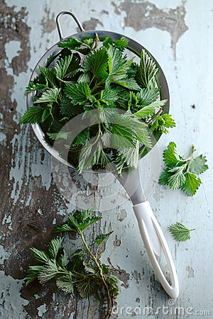 Free Stinging Nettle &x28; Urtica Dioica &x29; Royalty Free Stock Image - 53176456