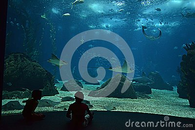 Stingrays in the aquarium Editorial Stock Image