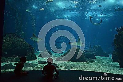 Stingrays in the aquarium