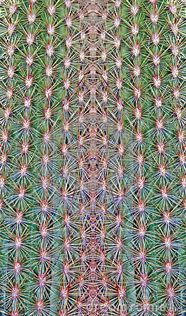 Free Stitched Cactus Royalty Free Stock Images - 13530329