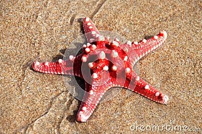 Stjärna för rött hav
