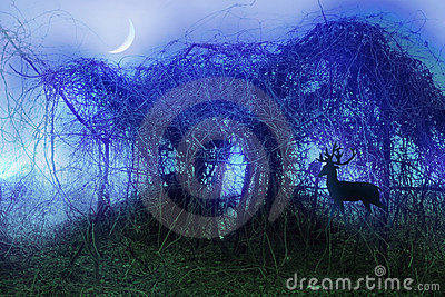 Stock image of mystical thicket