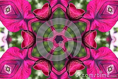 Stock image of Petunia Kaleidoscope