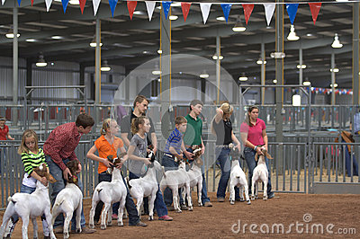 Stock and Rodeo Show Editorial Stock Photo