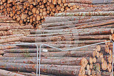 Stockpiled Logs