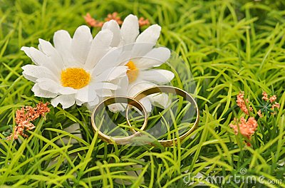 Stokrotka pierścionki