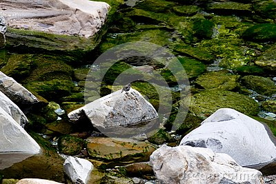 Stone, νερό και πουλί