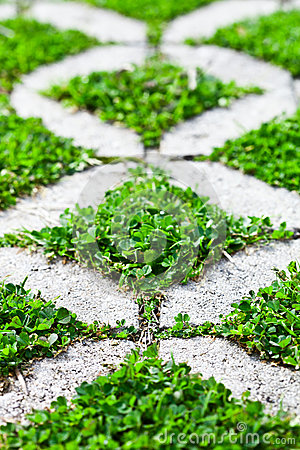 Free Stone Block Walk Path In The Park With Green Grass Stock Photo - 41855830