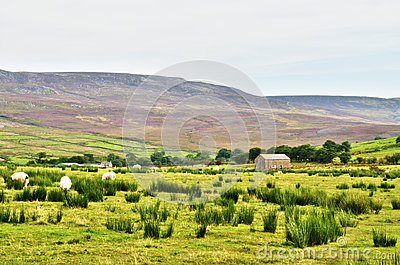 Stone built barn in a moorland setting with sheep.