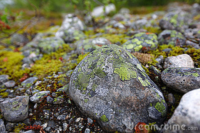 Stone with colorful moss