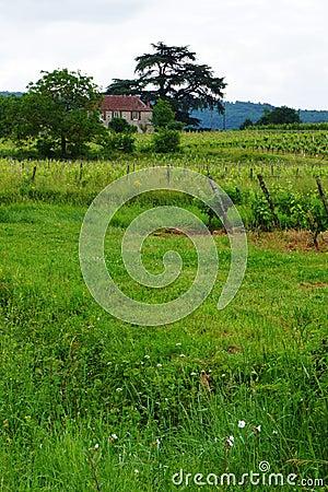 Stone house & vine yard, France