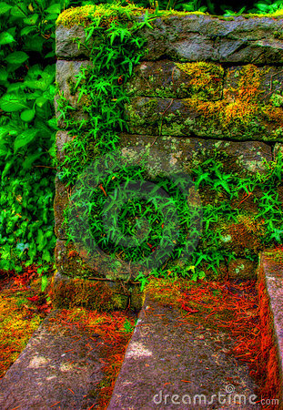 Stone And Ivy