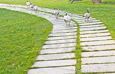 Stone path with ducks
