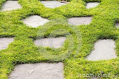 A Stone path in the green grass park garden