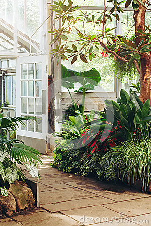 Free Stone Path In Botanical Garden Greenhouse With Many Green Trees, Plants And Colorful Flowers Royalty Free Stock Photo - 98641225