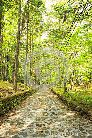 Free Stone Paved Road In Forest Royalty Free Stock Photo - 55542755
