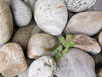 Stone pebbles and the fresh green plant