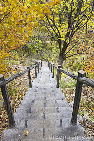 Stone stairs in forest